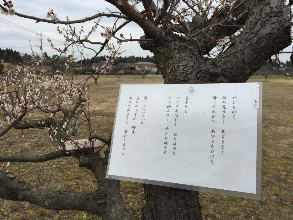 2016 2 24梅に歌 (2)